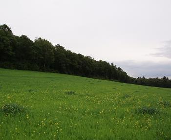2ha w Karniowicach
