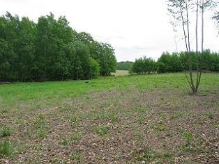 Działka rolna przy lesie