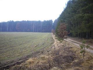 GN-401działka położona pod lasem