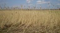 12 ha ziemi rolnej